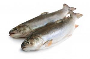 אכילת דגים ואלצהיימר